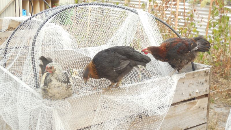 Buffy, Katie & Red check out the garden