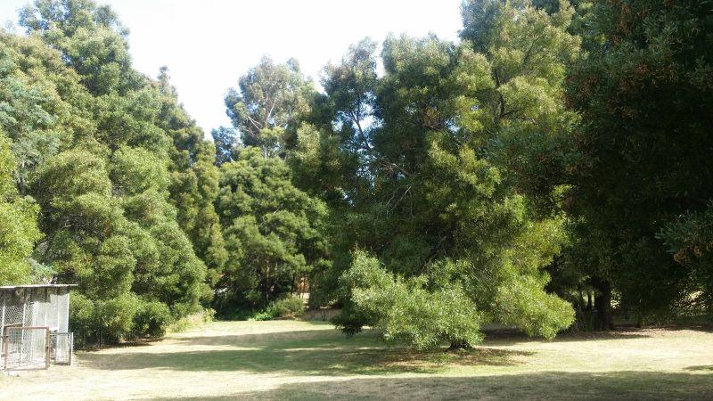 The Guinea Fowl Tree